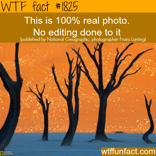Awesome photography shot! -WTF fun facts