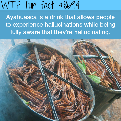 Ayahuasca - WTF fun facts