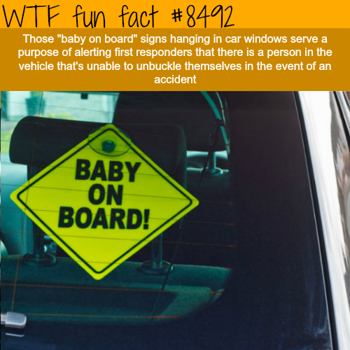 BABY ON BOARD! Signs - WTF fun facts