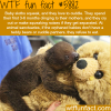 baby sloths love to cuddle wtf fun facts