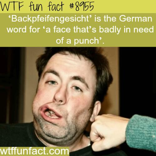 Backpfeifengesicht - WTF fun facts