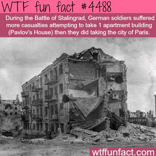 Battle of Stalingrad -   WTF fun facts