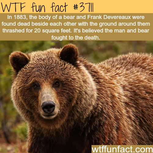 Bear and man fight -  WTF fun facts
