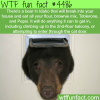 bear in idaho tries to get into a house through