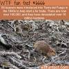 beavers in tierra del fuego wtf fun facts