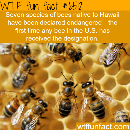 Bees are declared endangered around the world - WTF fun facts