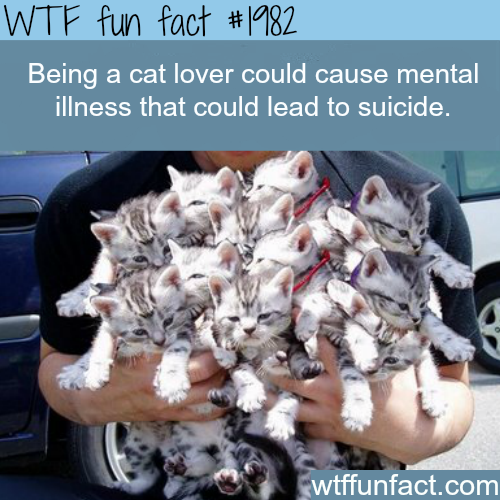 Being a cat lover could cause illness? -WTF fun facts