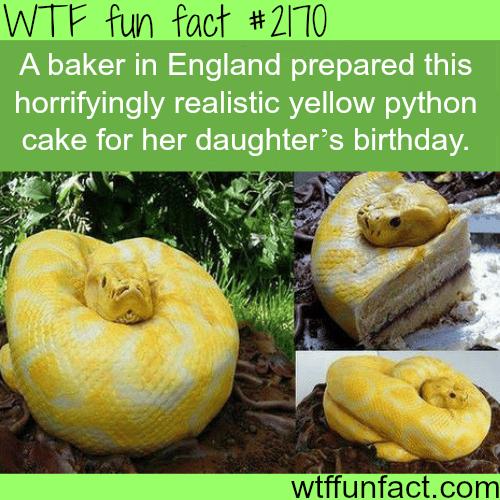 Best cake design ideas -WTF fun facts