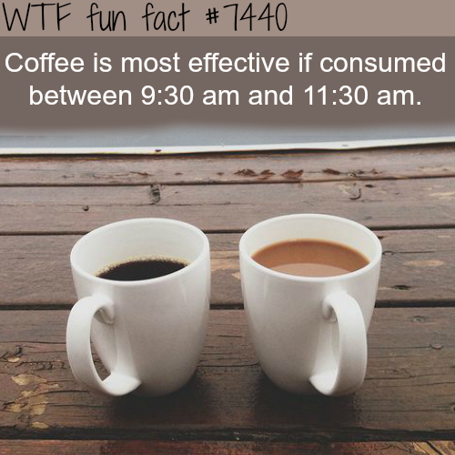 Best hours to drink coffee - Facts