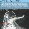 betobeto san wtf fun facts