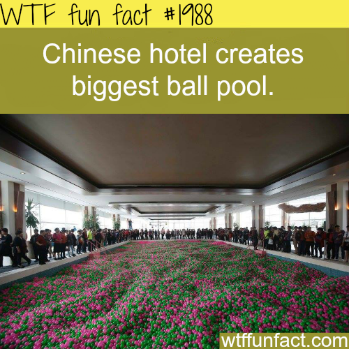 biggest ball pool - WTF fun facts