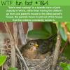 birds nest custody wtf fun fact