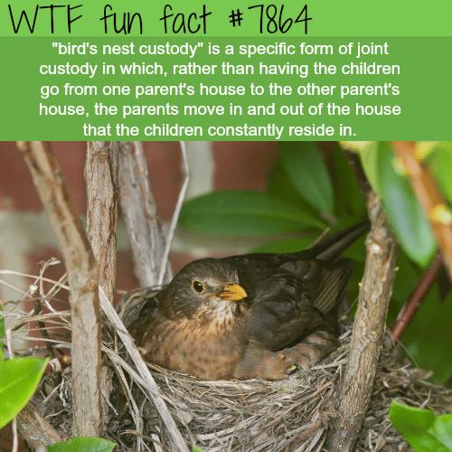 Birds nest custody - WTF fun fact