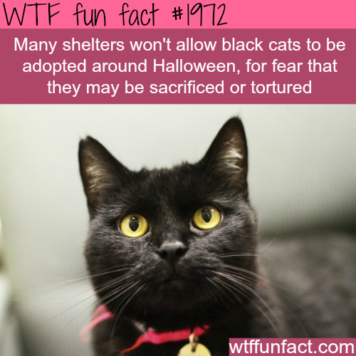 Black cats for halloween -WTF fun facts