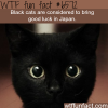 black cats in japan wtf fun facts
