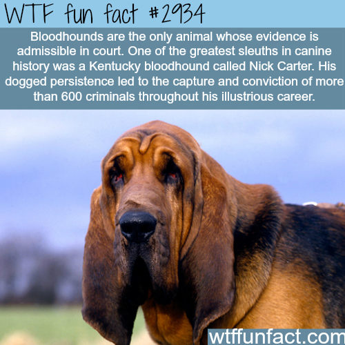 Bloodhounds is the only dog that.. -WTF fun facts