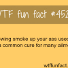 blowing smoke up your ass wtf fun facts
