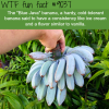 blue java banana wtf fun facts