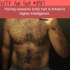 body hair is linked to higher intelligence wtf