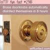 brass doorknobs disinfect themselves