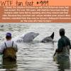 brazil has dolphins that help fishermen catch fish