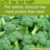broccoli wtf fun facts