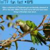 brooklyns parakeets wtf fun facts