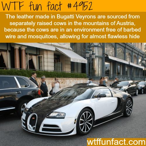 Bugatti facts - WTF fun facts