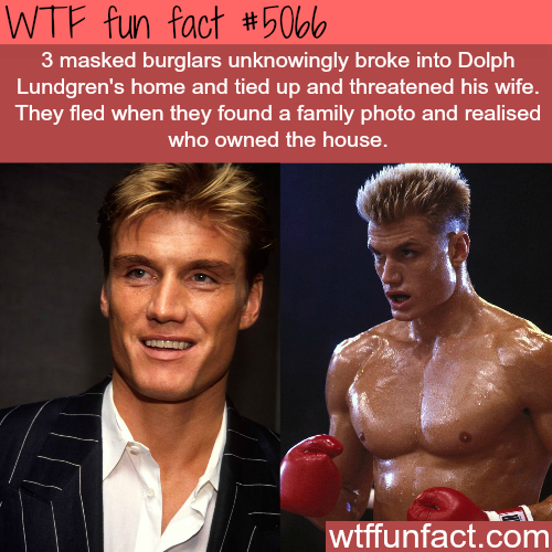 Burglars broke into Dolph Lundgren's house - WTF fun facts