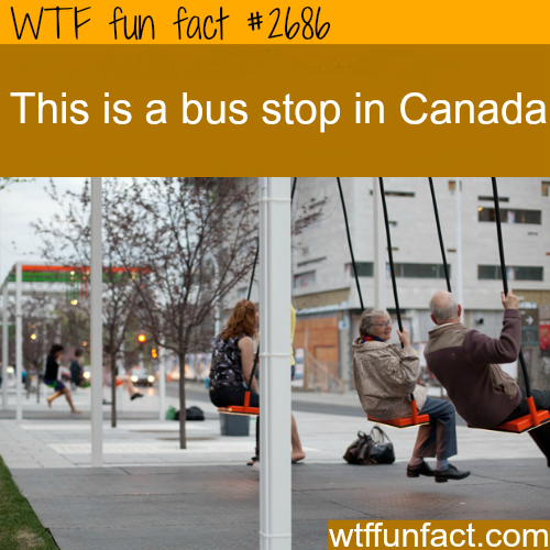 Bus Stop In Canada -WTF funfacts