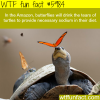 butterflies drink the tears of turtles wtf fun