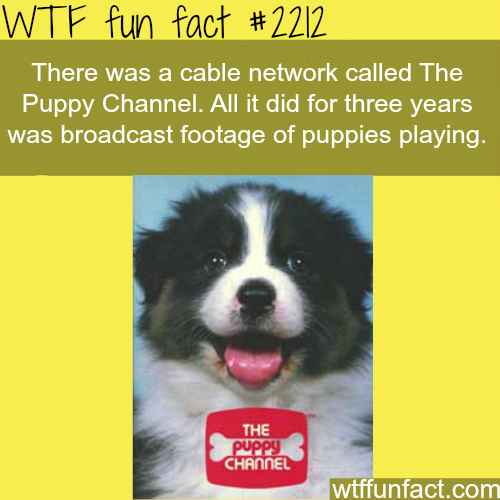"""Cable network """"puppy channel"""" -WTF fun facts"""