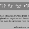 cameron diaz buy weed from snoop dogg