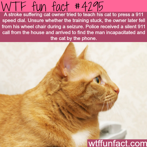 Cat learns how to dial 911 and saved it's owner life -  WTF fun facts