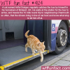 cat takes the bus regularly