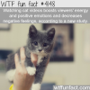 cat videos are good for you wtf fun facts