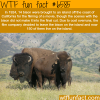 catalina island wtf fun facts