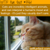 cats dont care about how you feel wtf fun facts