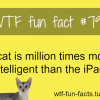 cats fact