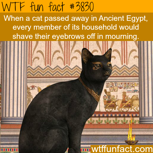 Cats in ancient Egypt - WTF fun facts