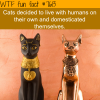 cats wtf fun facts