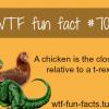 chicken and t rex