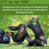 chimpanzees fart wtf fun fact