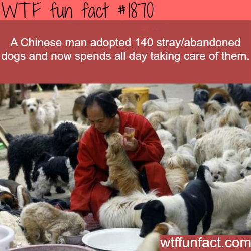 Chinese man adopt stray dogs - WTF fun facts