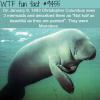 christopher columbus on mermaids wtf fun fact