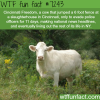 cincinnati freedom wtf fun fact