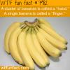cluster of bananas wtf fun fact