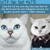 coby the cat wtf fun fact