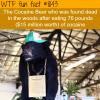 cocaine bear wtf fun fact