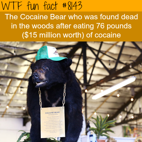 Cocaine bear - WTF fun fact